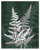 "Jewel Ferns IV by James Burghardt - 17"" x 21"""