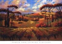 Evening Vineyard Fine Art Print