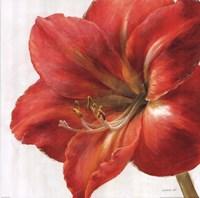 """Vivid Amaryllis by Danhui Nai - 18"""" x 18"""""""