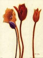 Tulipan III Framed Print