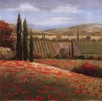 Tuscan Cypress I Fine Art Print