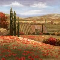"""Tuscan Cypress I by Nan - 20"""" x 20"""""""