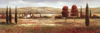Tuscan Poppies II Framed Print