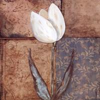 Tulip I Framed Print