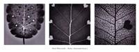 """Poetica Autumnalis Series I by Pawel Winczewski - 37"""" x 14"""""""
