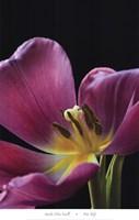 Pink Tulip Fine Art Print