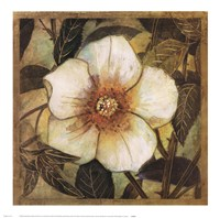 White Magnolia I Framed Print