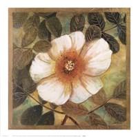 White Magnolia II Fine Art Print