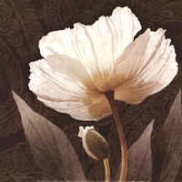 Paisley Poppy I Fine Art Print