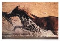 Running through Water Fine Art Print