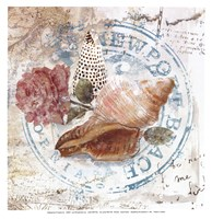 Seashells By The Seashore II Framed Print