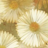 Daisy Story Square I Fine Art Print