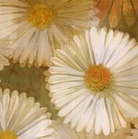 "Daisy Story Square I by Kathrine Lovell - 35"" x 35"""