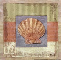 "Montego Scallop by Paul Brent - 12"" x 12"" - $9.99"
