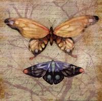 Vintage Butterflies II Framed Print