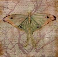 Vintage Butterflies III Fine Art Print