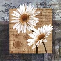 Daisy Field II Fine Art Print