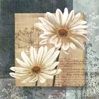 Daisy Field I Fine Art Print