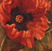 Red Poppy Fine Art Print