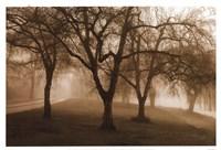 Misty Park Fine Art Print