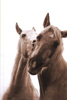 """24"""" x 36"""" Horse Pictures"""