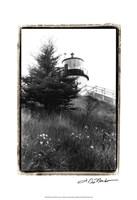"Owl's Head with Tree by Laura Denardo - 13"" x 19"""