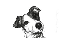 Robbie the Jack Russell Fine Art Print