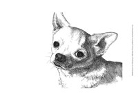 Bruiser the Chihuahua Fine Art Print