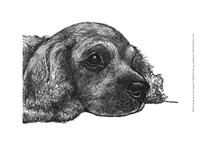Charlie the Cocker Spaniel Fine Art Print