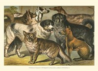 Johnson's Dog Breeds I Fine Art Print
