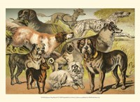 Johnson's Dog Breeds II Fine Art Print