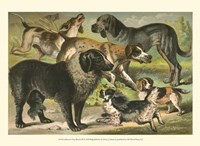 Johnson's Dog Breeds III Fine Art Print