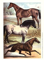 Johnson's Horse Breeds I Fine Art Print