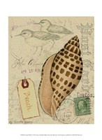 Postcard Shells I Fine Art Print