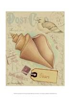 Postcard Shells III Fine Art Print