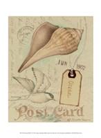 Postcard Shells IV Fine Art Print