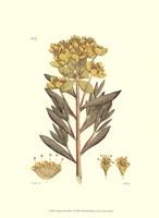 "Antique Floral Plate V by Vision Studio - 10"" x 13"""