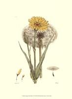 "Antique Floral Plate VI by Vision Studio - 10"" x 13"""