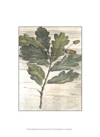 Small Weathered Oak Leaves II Fine Art Print