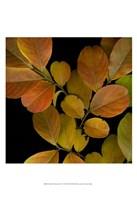 Small Vivid Leaves I Fine Art Print
