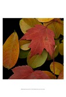 Small Vivid Leaves III Fine Art Print