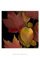 Small Vivid Leaves IV (ST) Fine Art Print