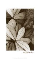 """Garden Textures I by Laura Denardo - 13"""" x 19"""""""