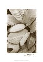 """Garden Textures II by Laura Denardo - 13"""" x 19"""""""