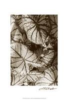 """Garden Textures IV by Laura Denardo - 13"""" x 19"""""""