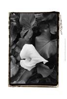 """Floral Elegance III by Laura Denardo - 13"""" x 19"""""""