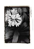 """Floral Elegance IV by Laura Denardo - 13"""" x 19"""""""