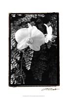 """Striking Orchids I by Laura Denardo - 13"""" x 19"""""""