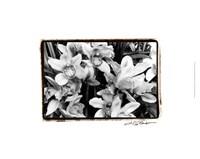 "Striking Orchids III by Laura Denardo - 19"" x 13"""