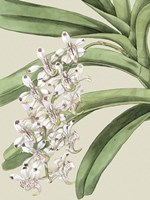 Small Orchid Blooms I (P) by Vision Studio - various sizes